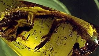 Lacertid in amber (2), different view